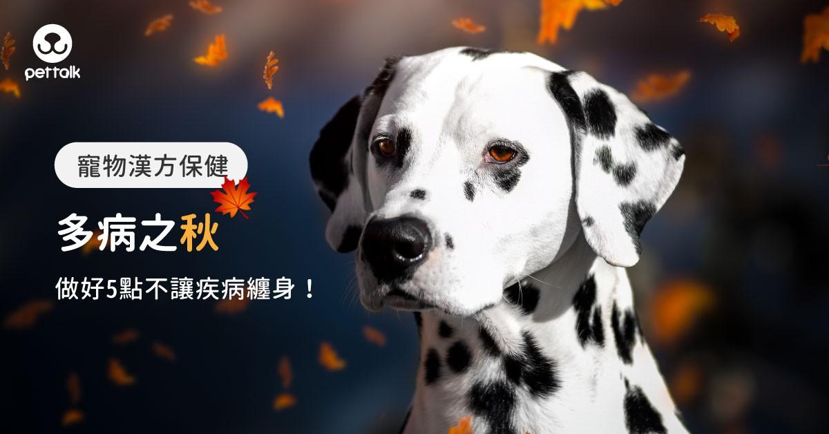 【寵物漢方保健】多病之秋!及早預防,做到這5點,狗狗不怕疾病纏身!|專業獸醫—姜家麟