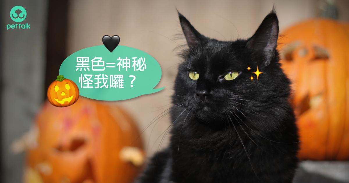【萬聖節特輯】你聽說哪些黑貓迷信/傳說?|PetTalk愛寵健康談