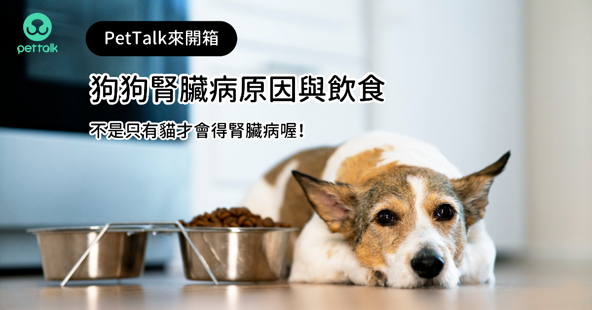 【PetTalk來開箱】不是只有貓才會得腎臟病,狗狗腎臟病原因與飲食 專業獸醫—姚勝隆