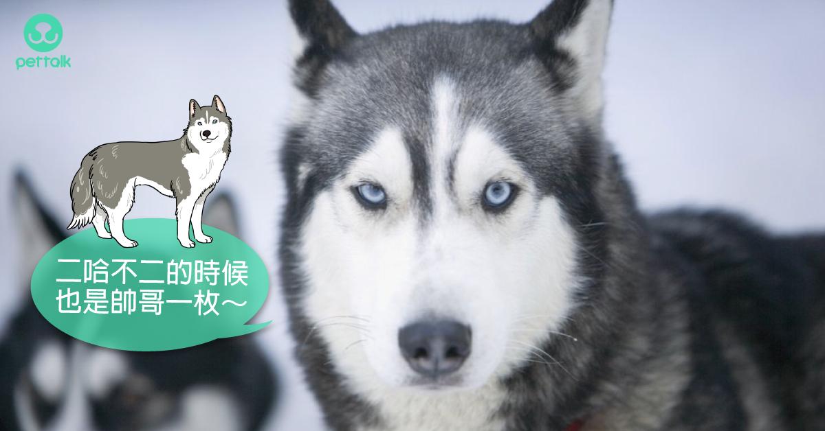 飼養前請先認識我:大型犬介紹(上集)|專業獸醫—楊靜宇