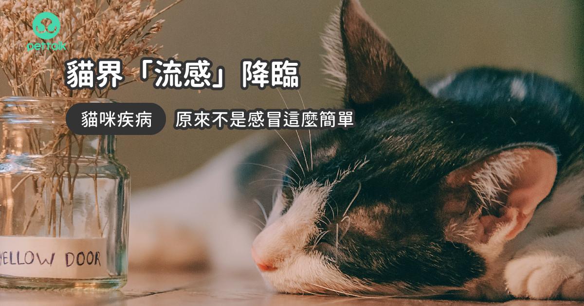 貓界「流感」降臨,請小心貓咪鼻氣管炎!|專業獸醫—王嶽