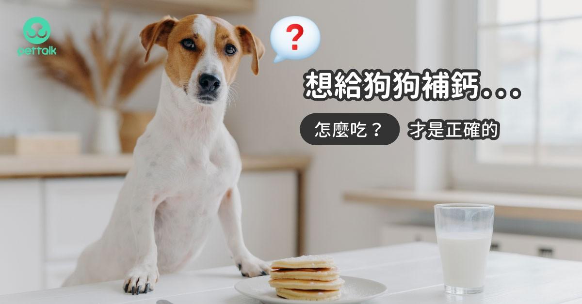 常見狗狗補鈣的錯誤觀念,怎麼吃才正確?|專業獸醫—王小玲
