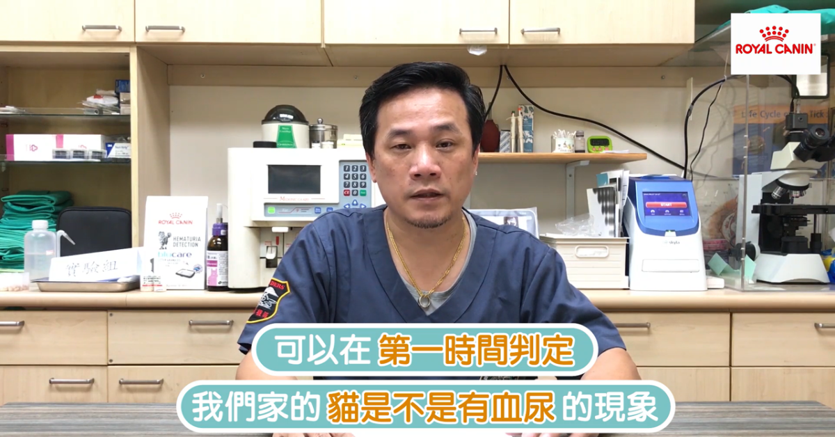 【PetTalk來開箱】新品上線!貓用血尿檢驗包,幫你監控貓咪的健康!|專業獸醫—姚勝隆