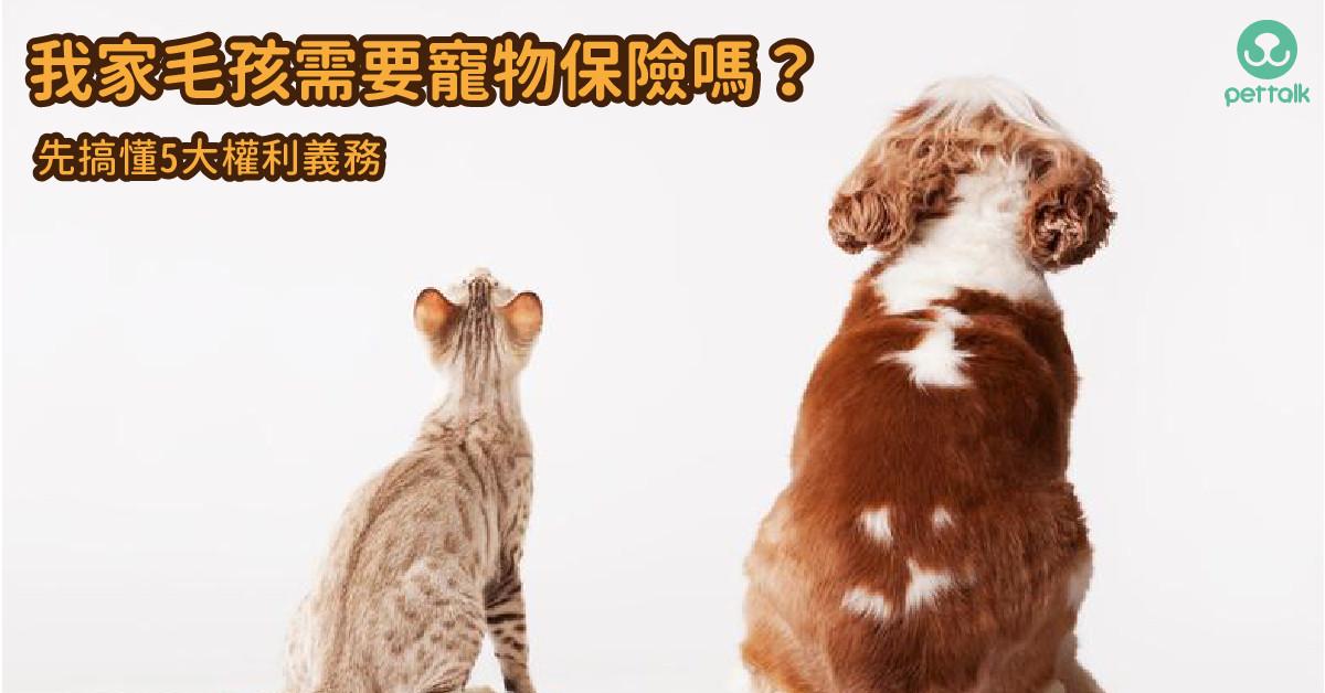 我家毛孩需要寵物保險嗎?先搞懂5大權利義務|專業獸醫—楊孝柏