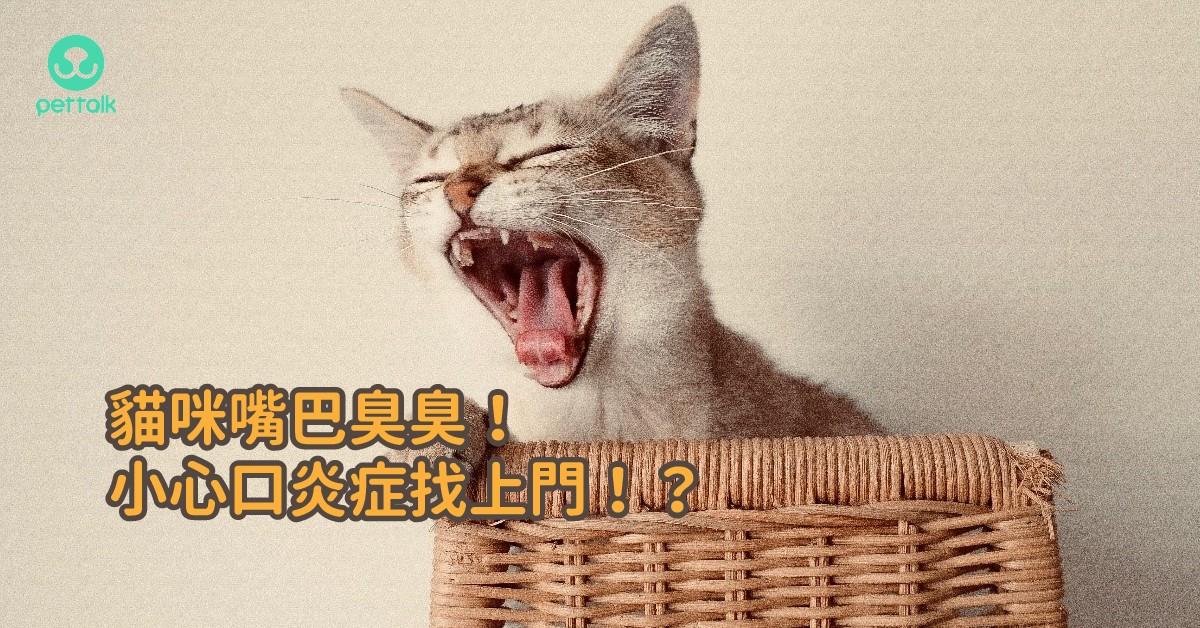貓咪嘴巴臭臭!小心口炎症找上門!?|專業獸醫—姚勝隆