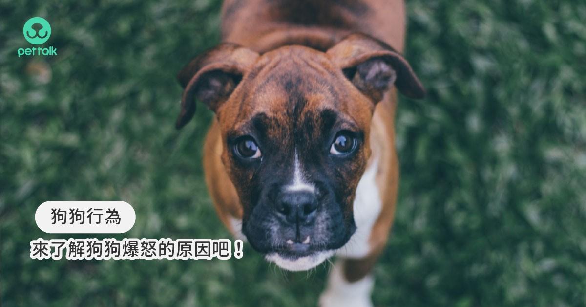 內有惡犬!不要讓愛犬變惡犬,一起來了解狗狗爆怒的原因吧!|專業獸醫—黃硯庭