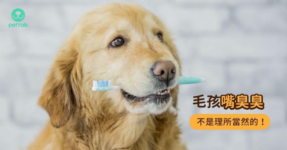 毛孩有口臭並不是理所當然,該重視口腔保健了!|專業獸醫—朱道南