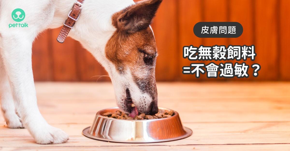 吃無穀飼料就不會過敏嗎?|專業獸醫—楊孝柏