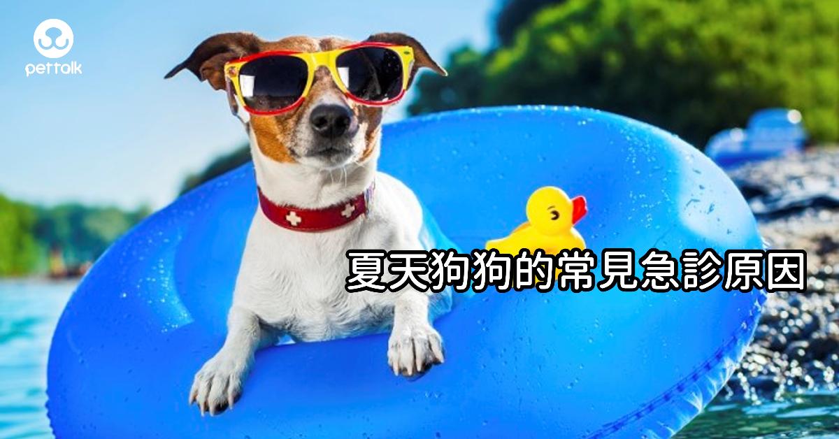 夏天狗狗的常見急診原因|PetTalk愛寵健康談