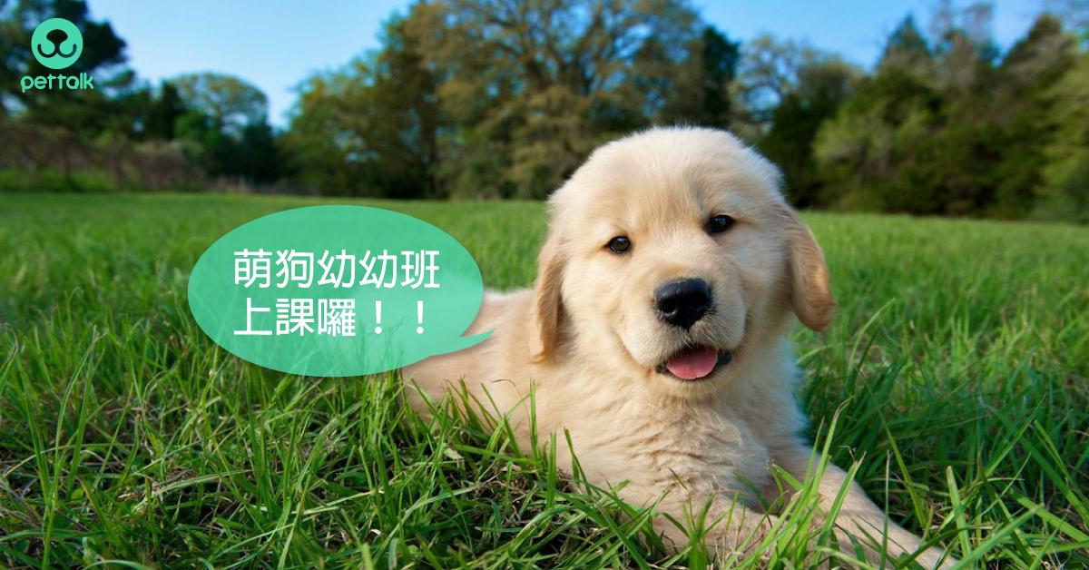 幼犬—成犬的生理照護處理時間表|PetTalk愛寵健康談