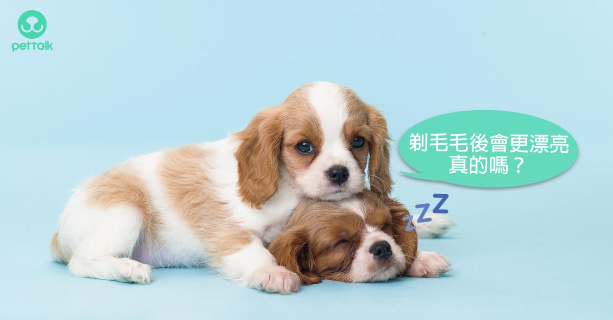 幼犬的毛需要剃光重長嗎?(上集)|寵物美容老師—林文琳