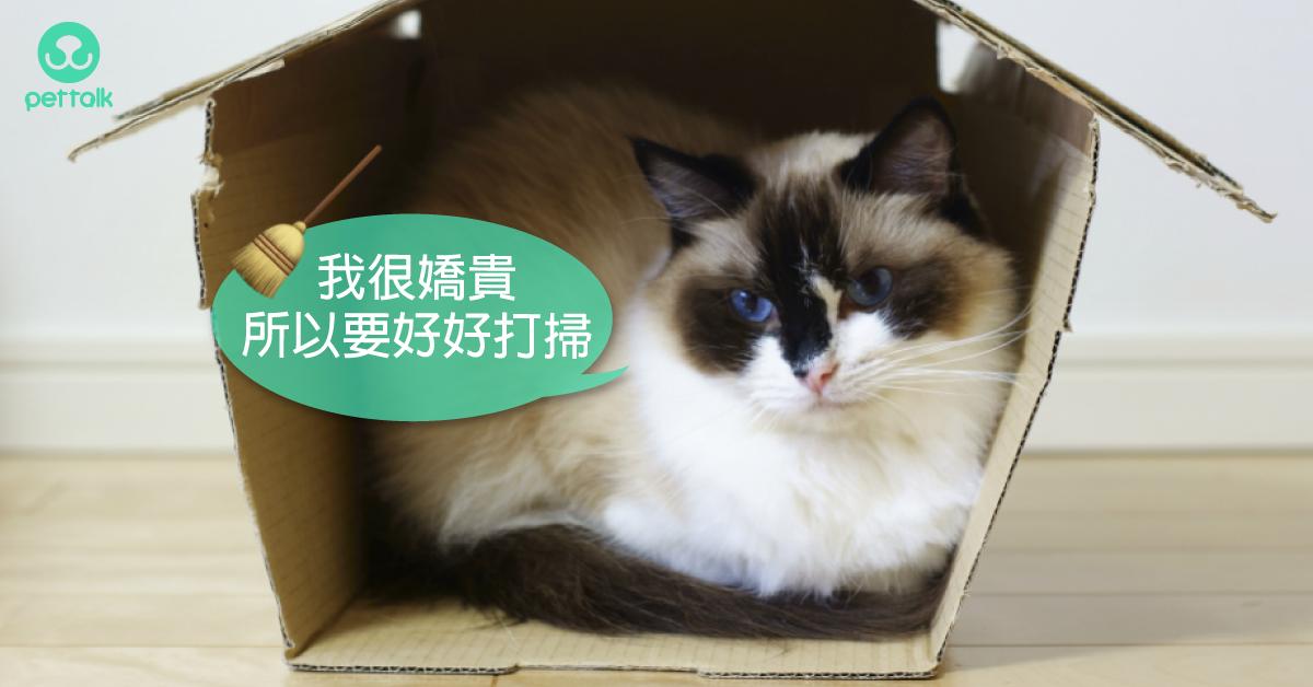 貓咪不出門,更要做好居家清潔!|專業獸醫—林源盛