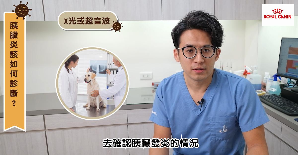 【PetTalk專訪】獸醫師告訴你胰臟炎預防、判斷及飲食大解析|專業獸醫—宋子揚