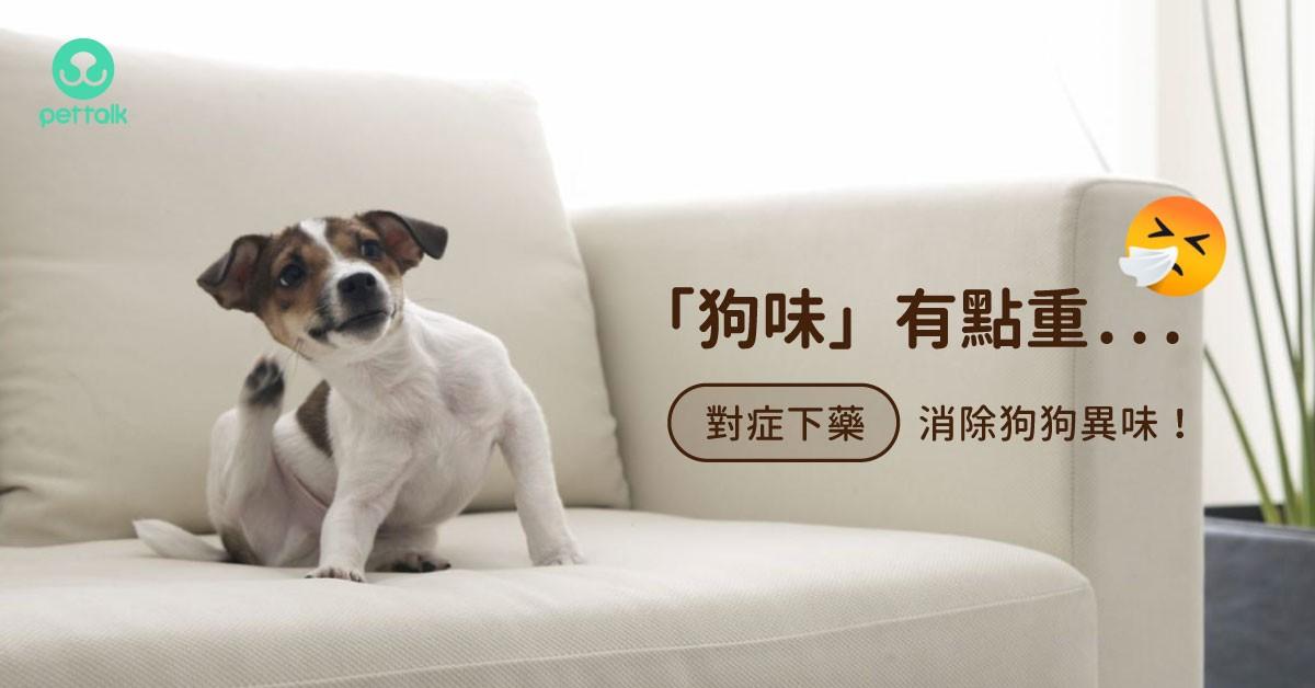 夏季「狗味」更濃郁,消除狗狗體味有撇步|專業獸醫—施懿軒