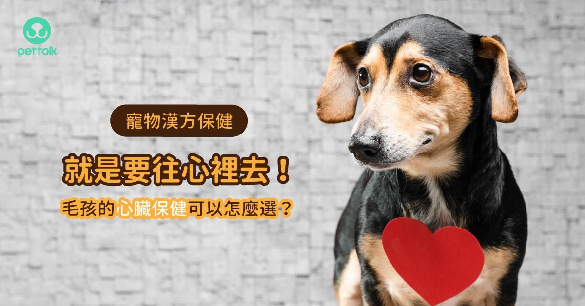 【寵物漢方保健】就是要「往心裡去」!毛孩的心臟營養保健可以怎麼選?|專業獸醫—姜家麟
