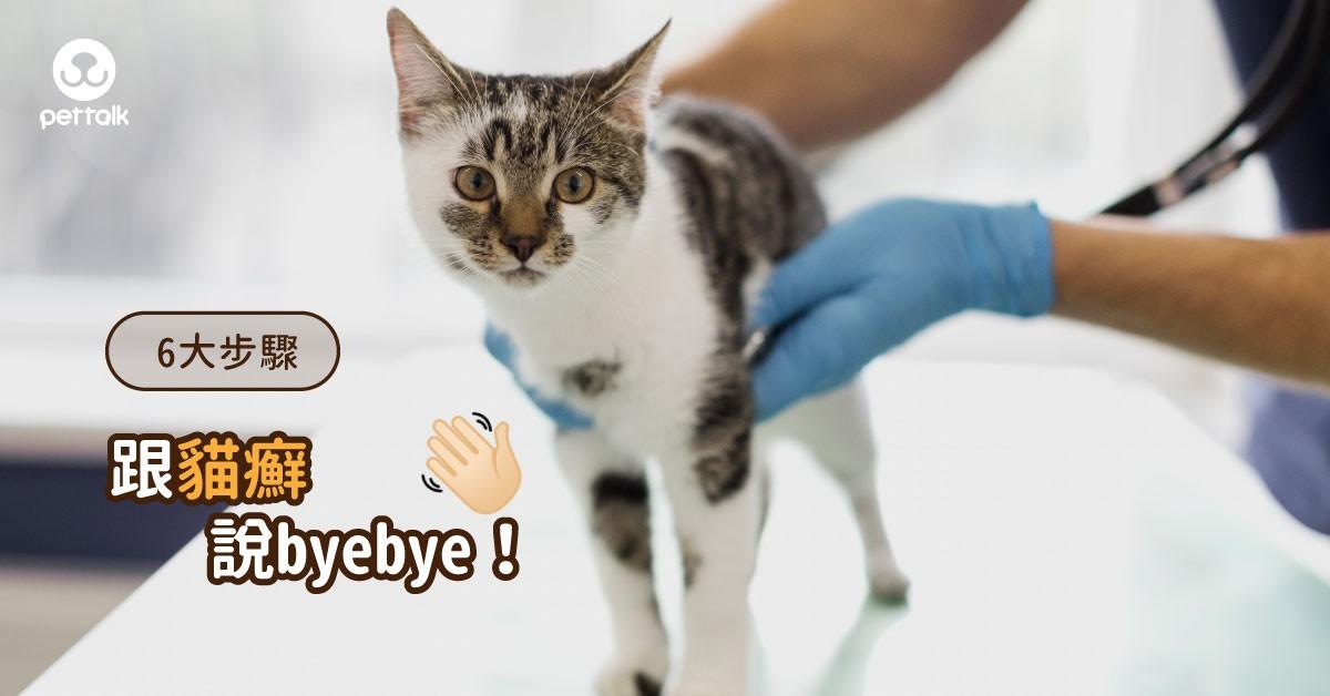 人貓都會得的貓咪皮膚病!想讓「貓癬」徹底消失該怎麼做?(下集–治療篇)|專業獸醫—李柏儒