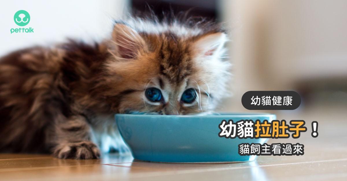 幼貓拉肚子怎麼辦?|專業獸醫—楊孝柏