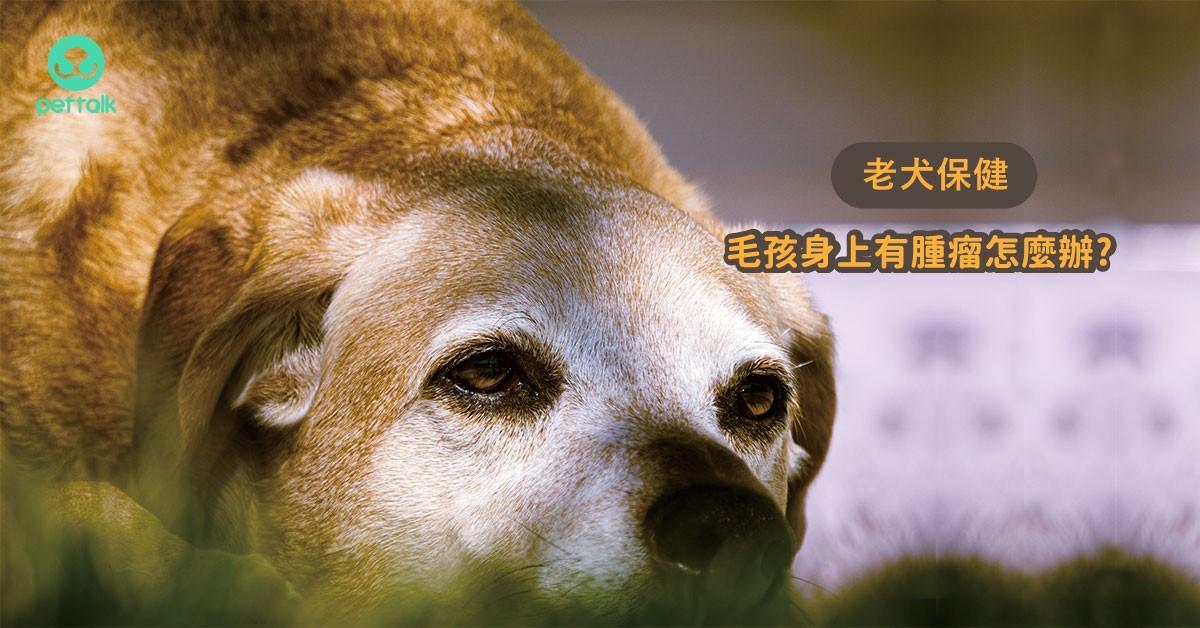 老犬老貓身上有腫瘤?3招教你該怎麼面對!|專業獸醫—杜瑜欣