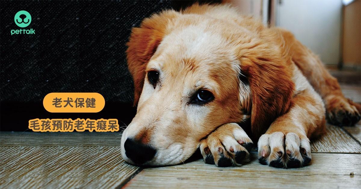 這些行為出現,代表狗狗正邁向老年癡呆啦!|專業獸醫—杜瑜欣