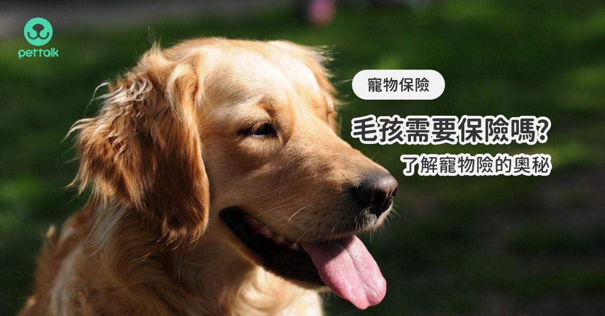 毛孩「保」起來,了解寵物險的奧秘|PetTalk愛寵健康談