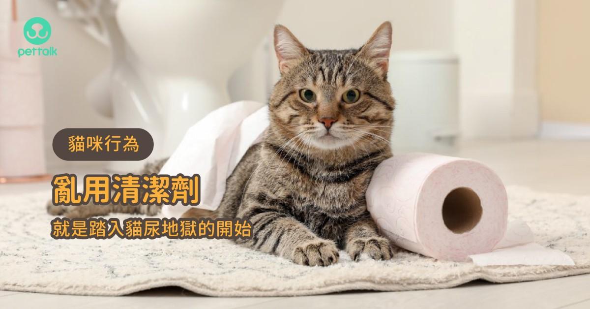 亂用清潔劑就是踏入貓尿地獄的開始|貓行為獸醫—林子軒