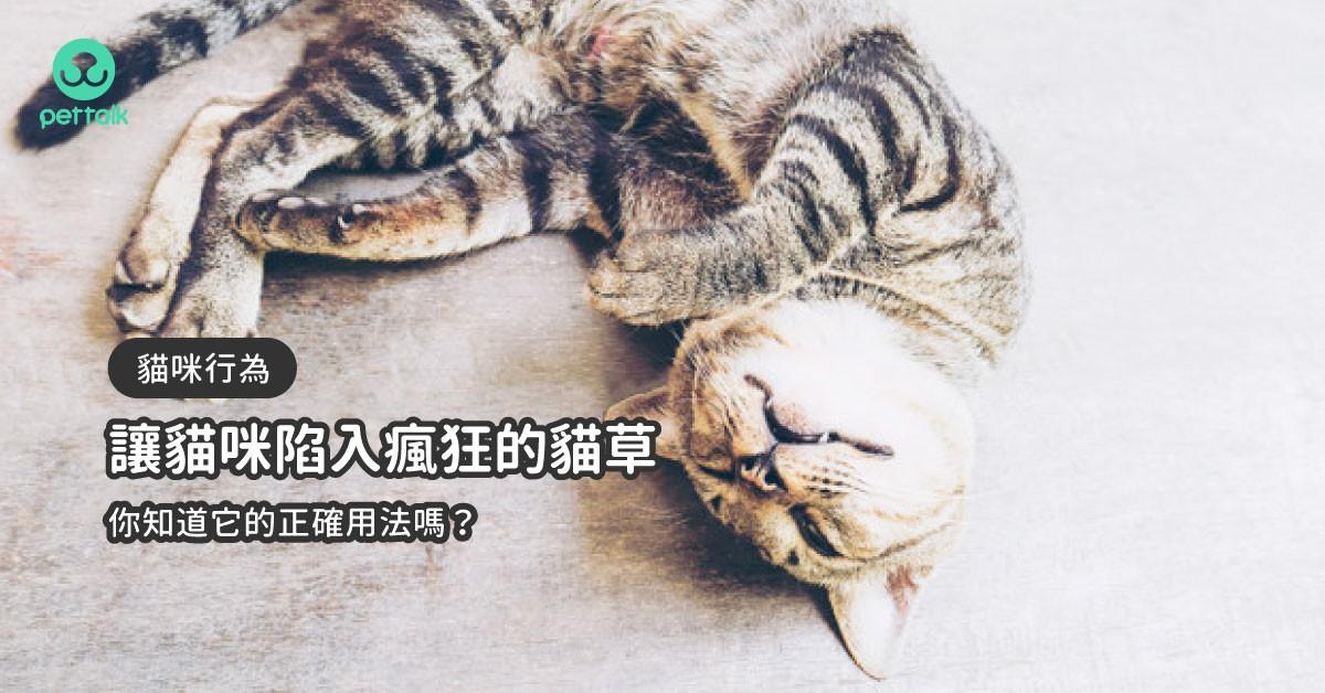 讓貓咪陷入瘋狂的貓草,你知道它的正確用法嗎?|貓行為獸醫—林子軒