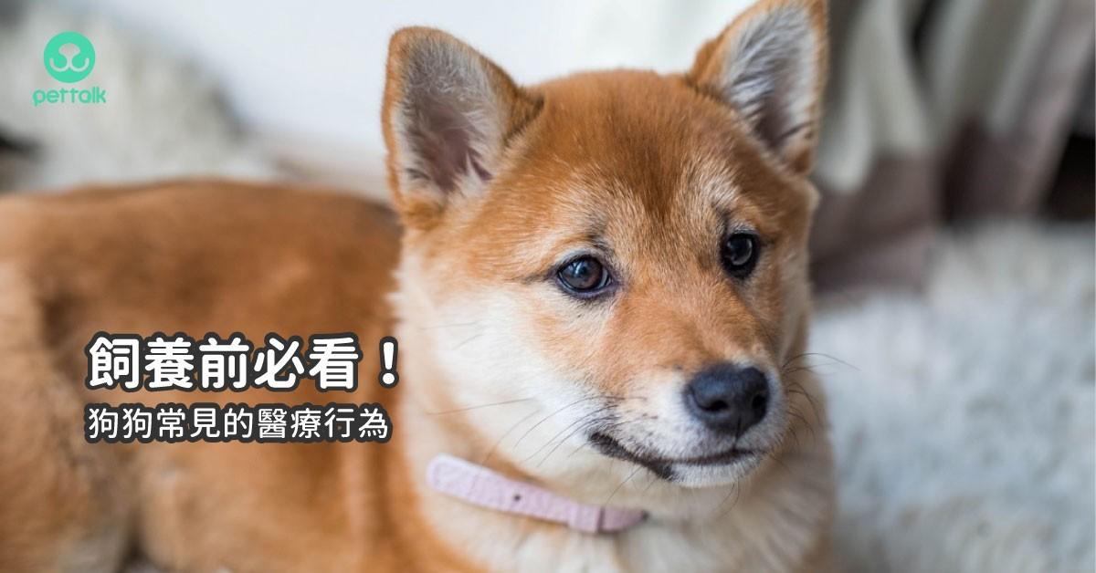 準備好了嗎,飼養前必看!狗狗常見的醫療行為到底有哪些?|專業獸醫—曾光佑