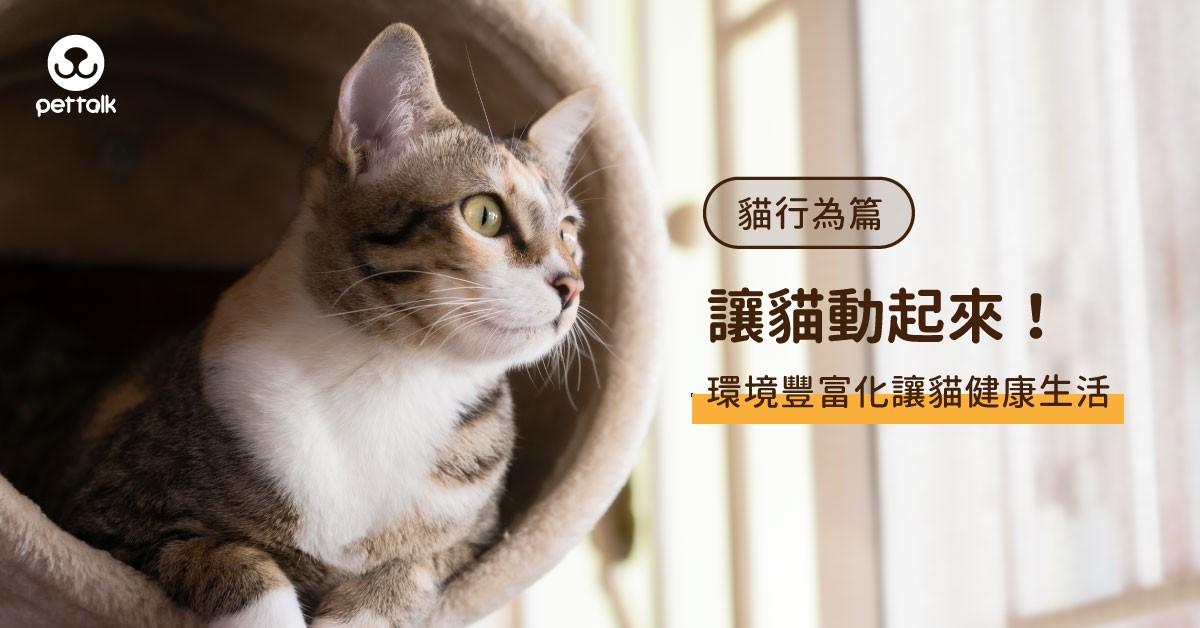 如何讓貓動起來?豐富環境讓貓健康生活|專業獸醫—徐莉寧