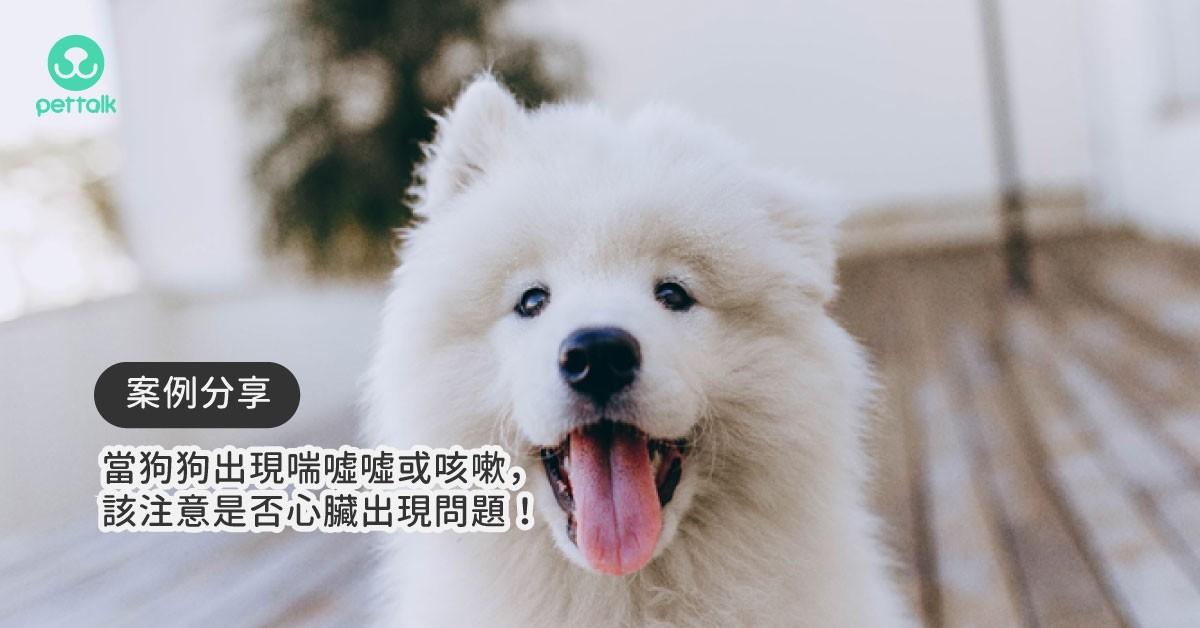 當狗狗出現喘噓噓或咳嗽時,該注意是否心臟出現問題!|專業獸醫—黃硯庭