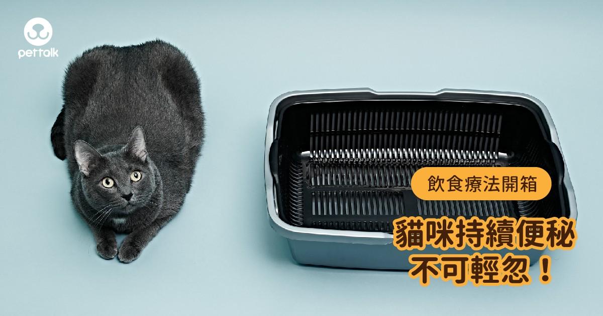 【飲食療法開箱】貓咪持續便秘不能輕忽!|PetTalk愛寵健康談
