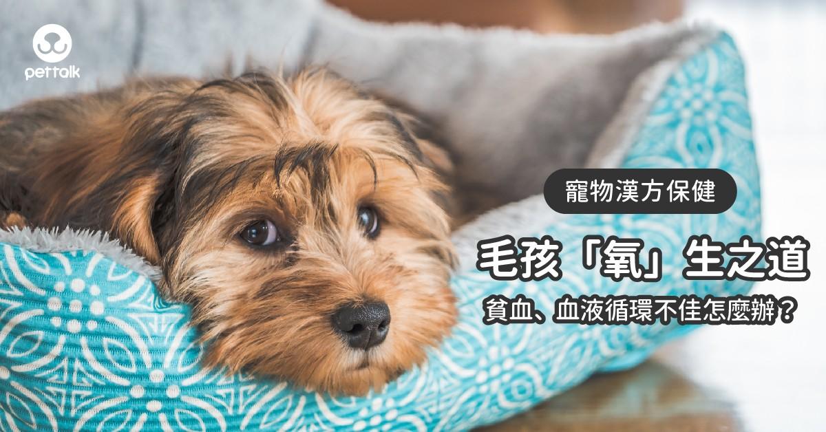 【寵物漢方保健】毛孩的「氧」生之道—毛孩貧血及血液循環不佳問題|專業獸醫—姜家麟