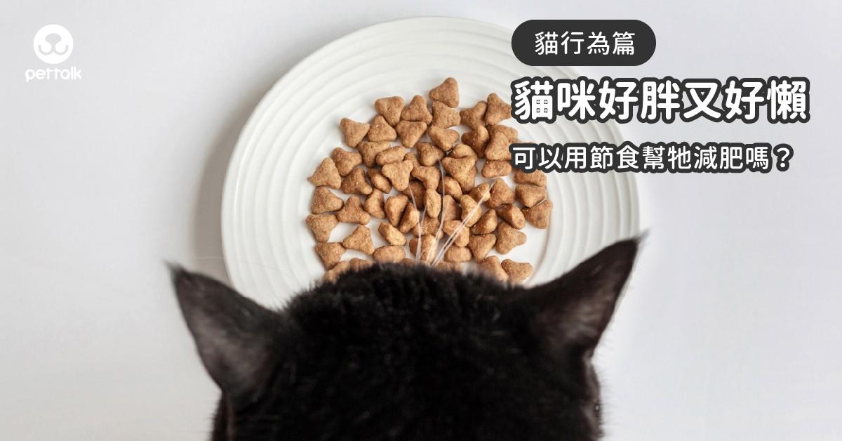 貓主子好胖又好懶,可以靠「節食」來幫牠減重嗎?|PetTalk愛寵健康談