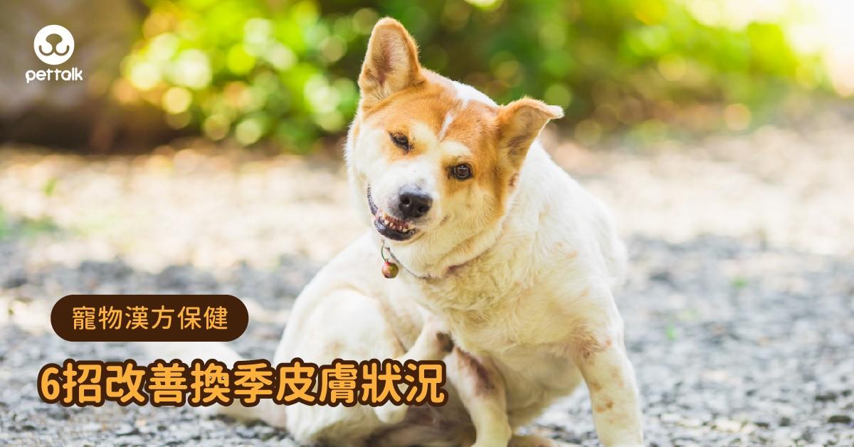 【寵物漢方保健】狗狗換季肌膚問題總是沒完,這幾招幫助改善皮膚狀況!|專業獸醫—姜家麟