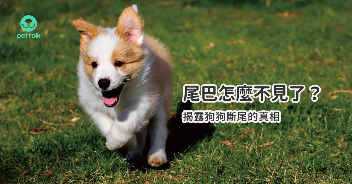 尾巴怎麼不見了?揭露狗狗斷尾的真相|專業獸醫—李道絨