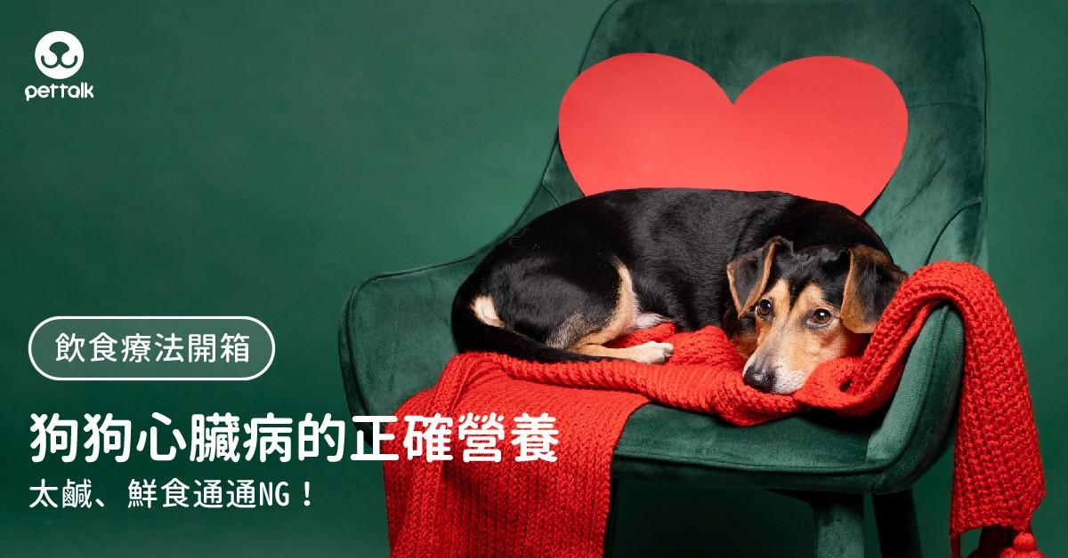 【飲食療法開箱】太鹹、鮮食都NG!狗狗心臟病需要正確的營養|PetTalk愛寵健康談