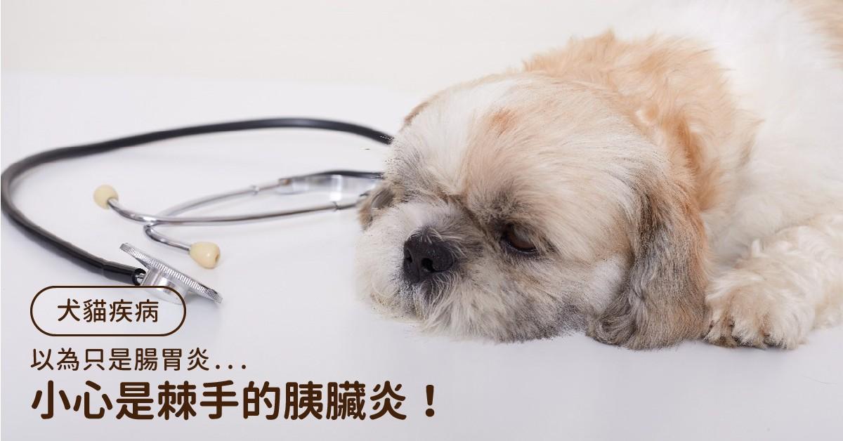 單純腸胃炎?小心是棘手的犬貓胰臟炎!|專業獸醫—温琮斐