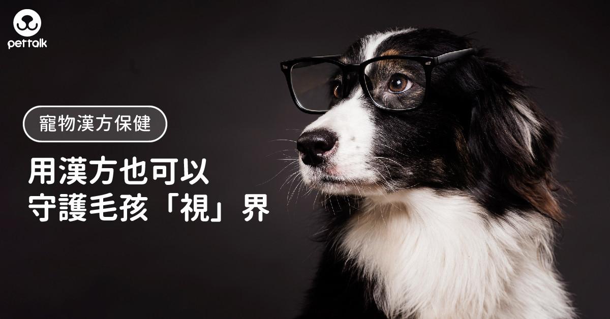 【寵物漢方保健】不止牛磺酸、葉黃素,還有這些成分可以守護毛孩「視」界|專業獸醫—姜家麟