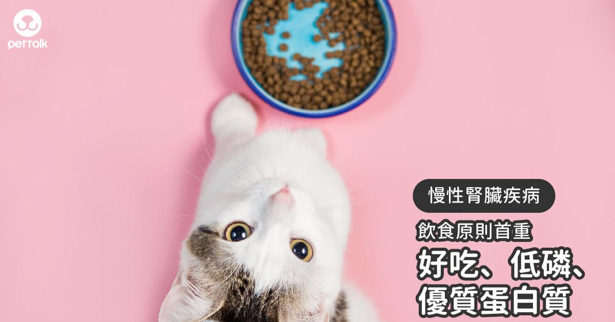 腎病毛孩飲食首重「好吃、低磷、優質蛋白質」|專業獸醫—温琮斐