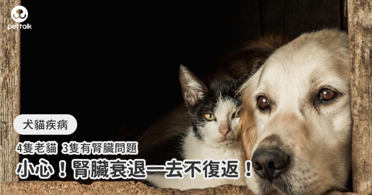 4隻老貓3隻有腎臟問題...腎臟衰退一去不復返!|專業獸醫—胡譽嚴