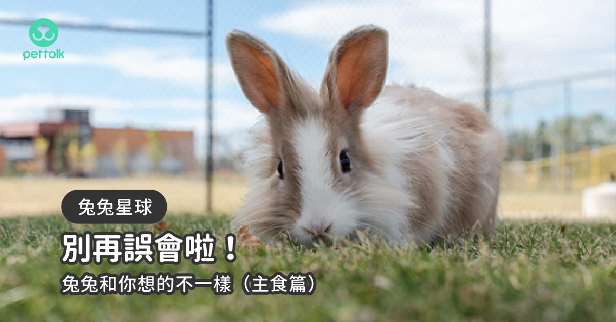 【兔兔星球】別再誤會啦!兔兔和你想的不一樣(主食篇)|專業獸醫—侯彣