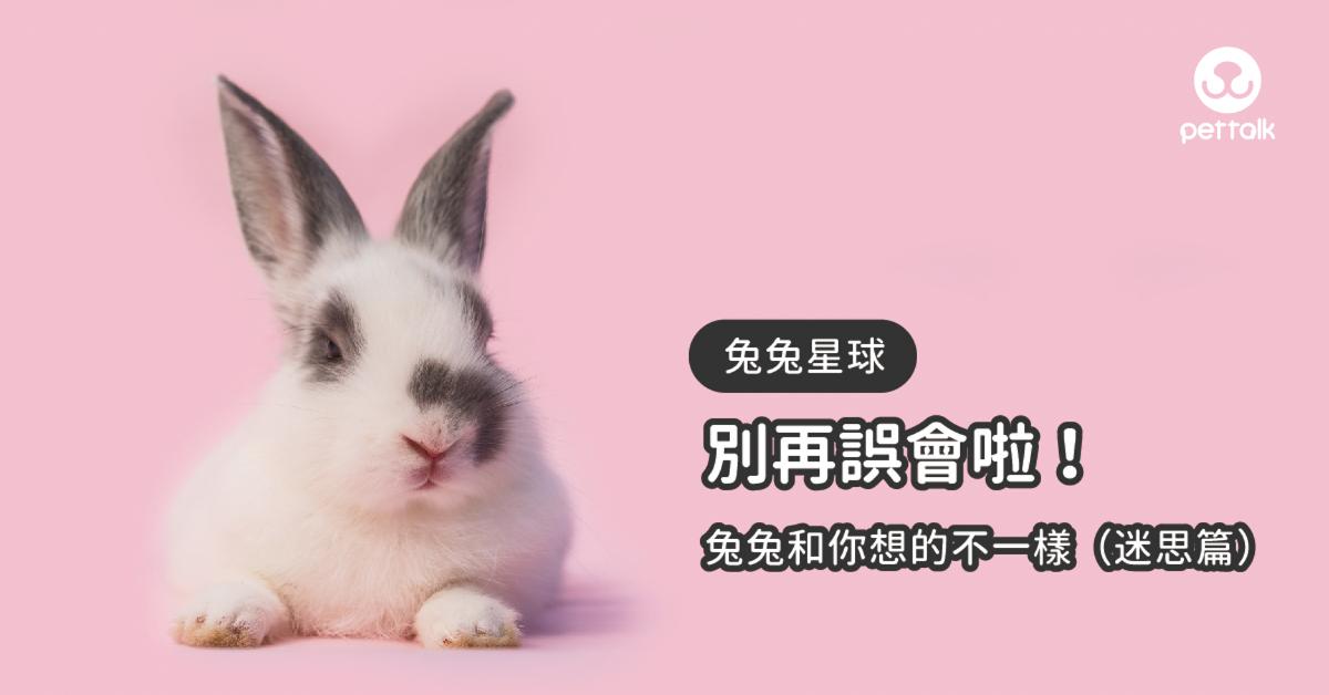 【兔兔星球】別再誤會啦!兔兔和你想的不一樣(迷思篇)|專業獸醫—侯彣