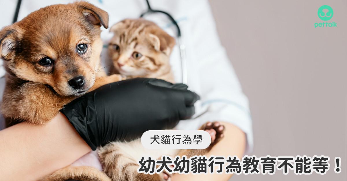 注意~幼⽝幼貓的行為教育不能等!|專業獸醫—林瑋真