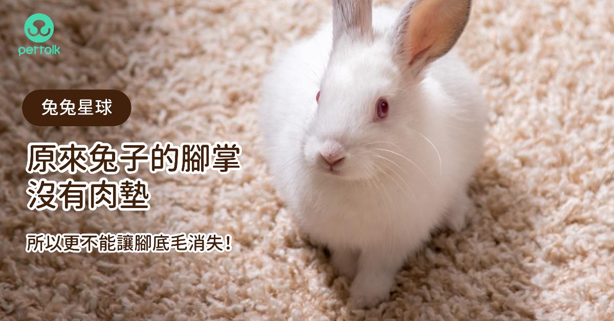 【兔兔星球】原來兔子的腳掌沒有肉墊,所以更不能讓腳底毛消失!|專業獸醫—侯彣