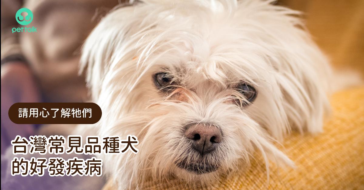 台灣常見品種犬的好發疾病|PetTalk愛寵健康談