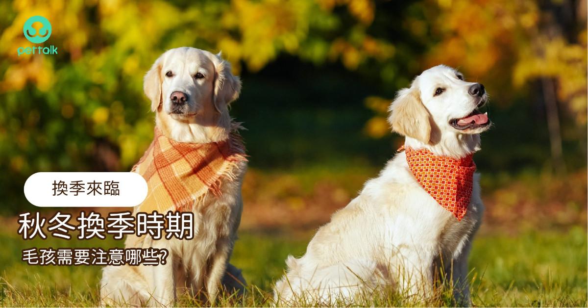 秋冬換季,毛孩需要注意的事情有哪些?|專業獸醫—程若芷